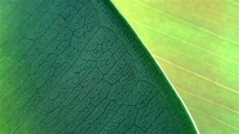 mac os x wallpaper hd 1920x1080 green leaves mac os x mountain lion hd wallpapers