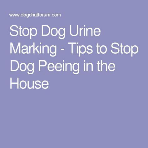 dog will not stop peeing in the house 15 must see dog pee pins cat urine remover cleaning cat