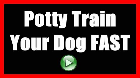 train dog not to pee in house how to potty train a dog to not poop indoors house train a dog to go outside youtube