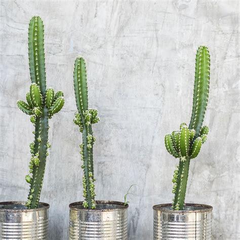 Le Deco by D 233 Co D Int 233 Rieur La Tendance Au Cactus Magazine Avantages