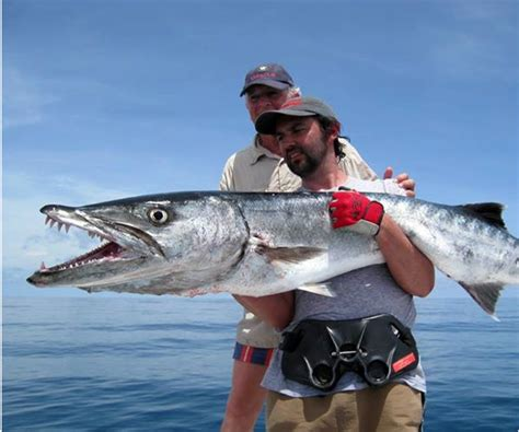 Florida Records Largest Barracuda Gallery