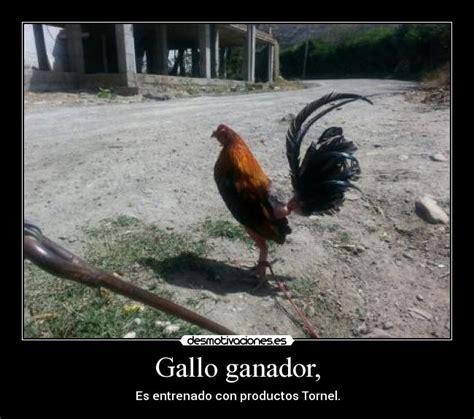 imagenes de gallos con frases newhairstylesformen2014 com imagenes de gallos con frases imagenes de gallos con