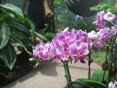 imagenes de jardines con orquideas los jardines bot 225 nicos m 225 s hermosos del mundo