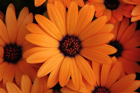 colorful flowers picture orange flowers in bloom light orange flowers flowers wallpapers