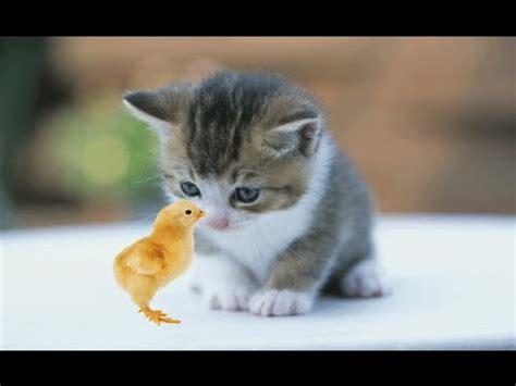 kucing cantik kucing  cantik kucing cantik