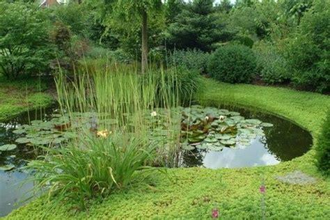 amenagement jardin avec piscine 894 bassin de jardin bassin jardin aquatique etang dinant