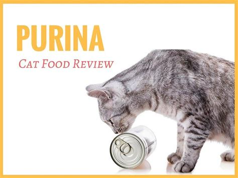 food review purina cat food review tinpaw