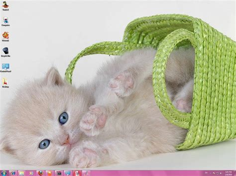 cute kitten themes for windows 7 cute cats windows 7 theme by yonited on deviantart