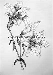 original pen and ink tiger lily drawing on white by