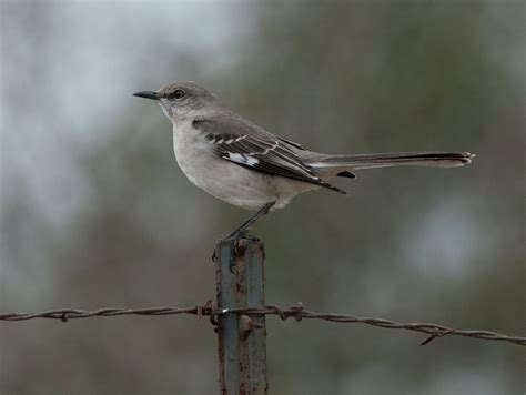 texas bird images reverse search