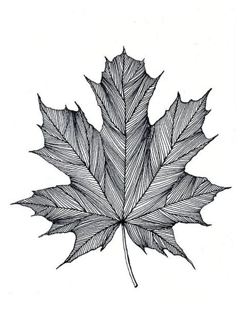 Organic Sketchy Lines by Best 25 Leaf Drawing Ideas On Watercolor