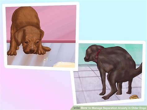 dog separation anxiety pooping in the house 3 ways to manage separation anxiety in older dogs wikihow