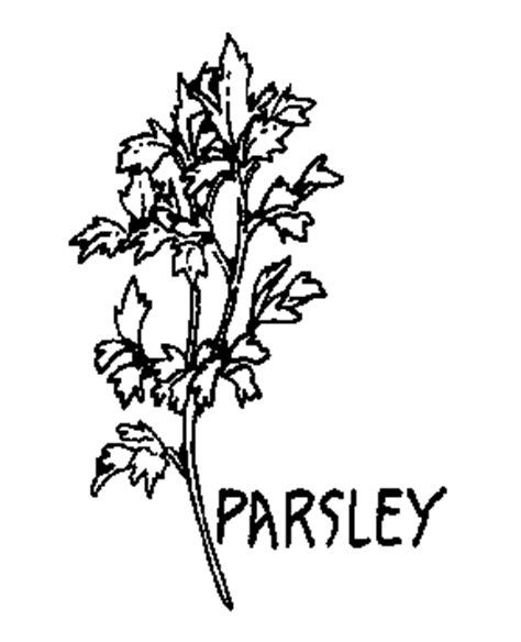herb garden coloring page parsley 20clipart clipart panda free clipart images