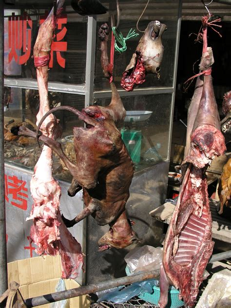 who eats dogs china eats dogs and cats images