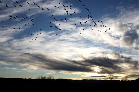 Landscape Poetry Definition Flock Of Birds In Sky Picture Free Photograph Photos