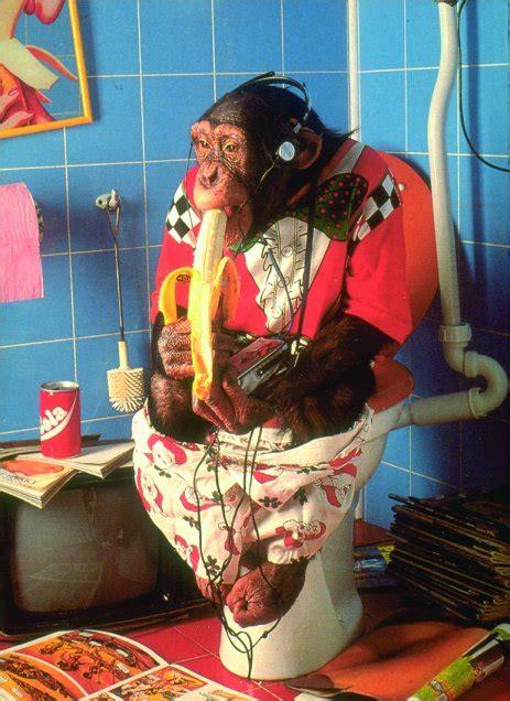 alimentazione scimmie la dieta ideale e l importanza delle verdure nell