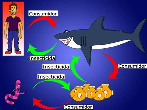 cadenas alimentarias ejemplos yahoo imagenes de la cadena alimenticia del ser humano imagui