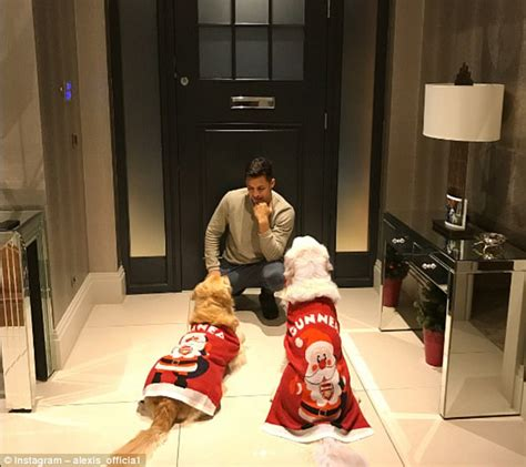 alexis sanchez dad arsenal s alexis sanchez gets christmas jumpers for dogs