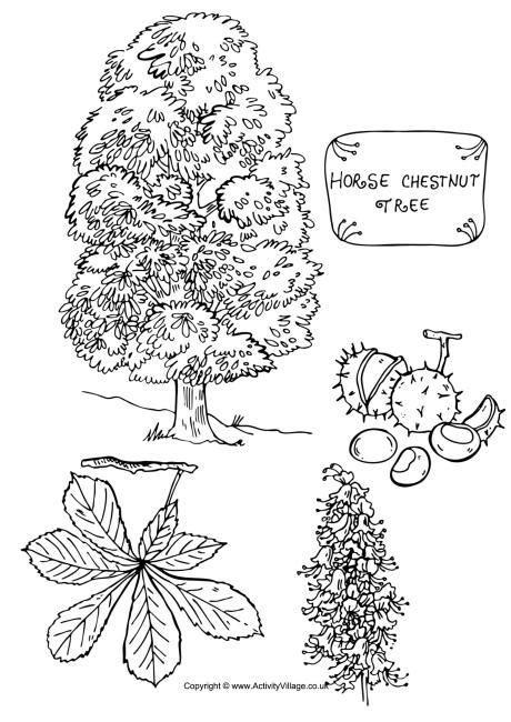 blue ash tree coloring page free printable coloring pages horse chestnut tree colouring page