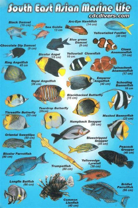 saltwater tattoo supply top 25 best marine fish tanks ideas on