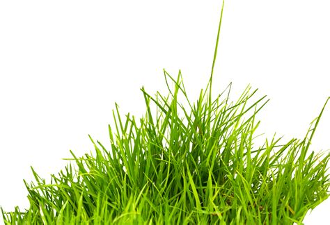 gambar rumput format png grass png images pictures