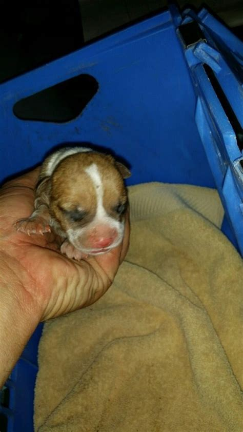 Search Warrant Arizona Serving Search Warrant At Arizona Home Find Puppy Trapped In Sewage Pipe Cp24