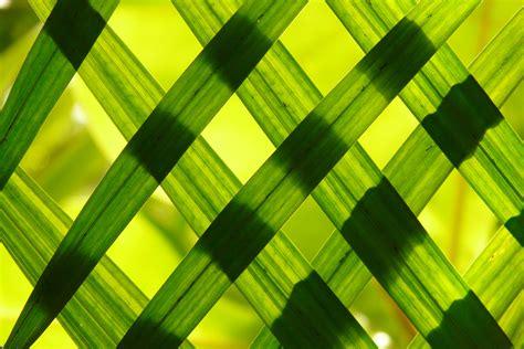 engaging bamboo  pexels  stock