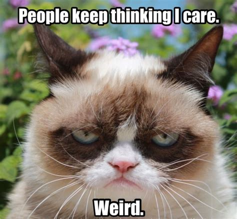 grumpy cat people keep thinking i care weird cats