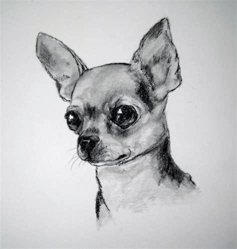 alimentaci n para canarios the 25 best perritos chihuahuas ideas on pinterest ojos