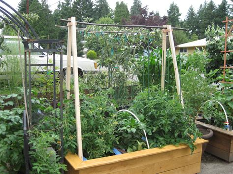 shade gardener overhead vertical tomato trellis