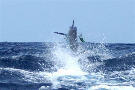 rainbow sport fishing boats outdoor adventures worldwide costa rica sportfishing