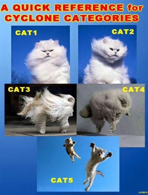 Meme Categories - cat 1 to 5 cyclone chart funnies pinterest cats and