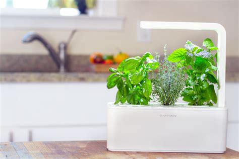 grows herbs and plants with smart herb garden in your grows herbs and plants with smart herb garden in your