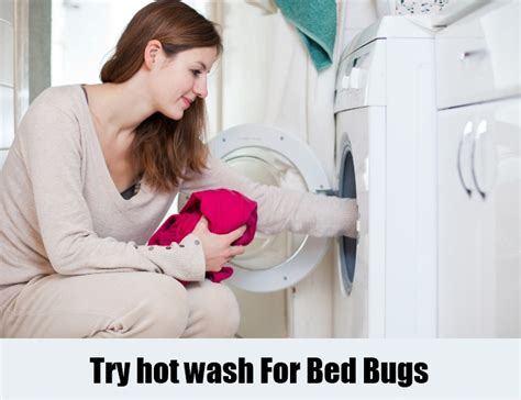 do bed bugs die in the washer 12 herbal remedies for bed bugs how to cure bed bugs