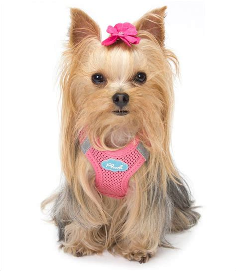 best harness for yorkie puppy plush air mesh vest harness puppy yorkies and
