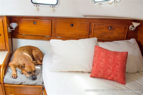 cheap n easy dog bed diy diy custom shaped dog bed where the coconuts grow