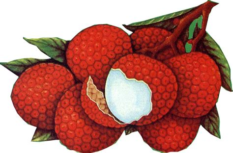 p i fruits ltd lychee in syrup suppliers exporters on 21food
