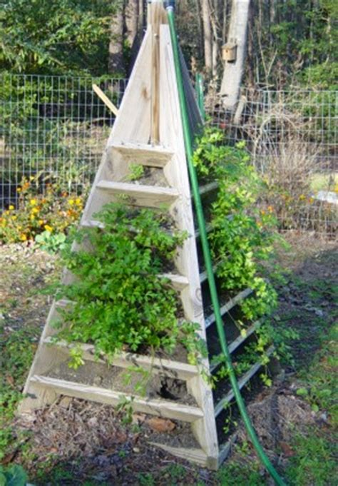 Strawberry Planter Plans by How To Build A Pyramid Strawberry Planter Diy Plans