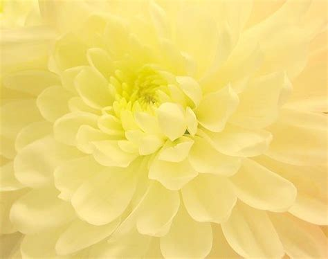 Pineapple Background Kuning 25 best ideas about pastel yellow on