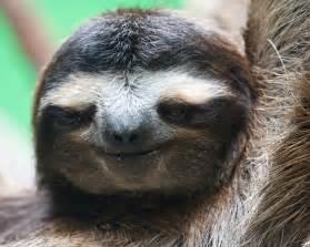 i want a pet sloth look how cute me pinterest