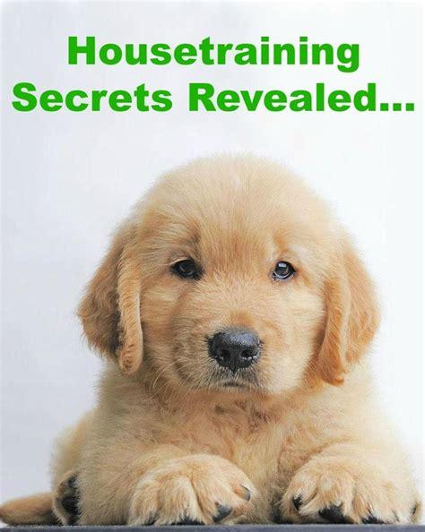 are golden retrievers easy to potty 17 best ideas about golden retriever names on pupper doggo retriever