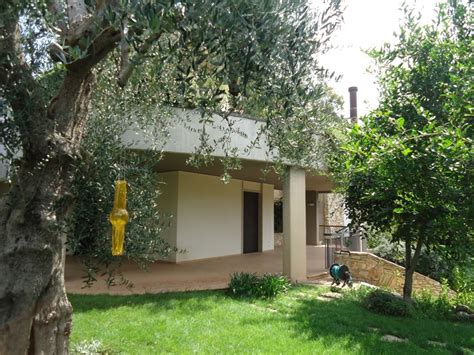 ulivo giardino giardino con ulivo design per la casa moderna ltay net