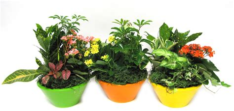 potted plants potted plants avon valley floral potted plants