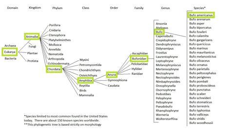taxonomy template uwl website