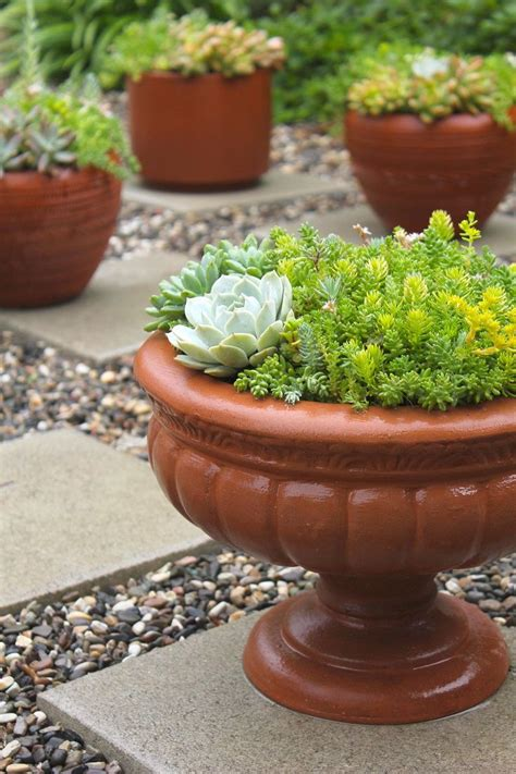best 20 succulent ground cover ideas on