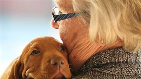 best breeds for seniors the 8 best breeds for seniors