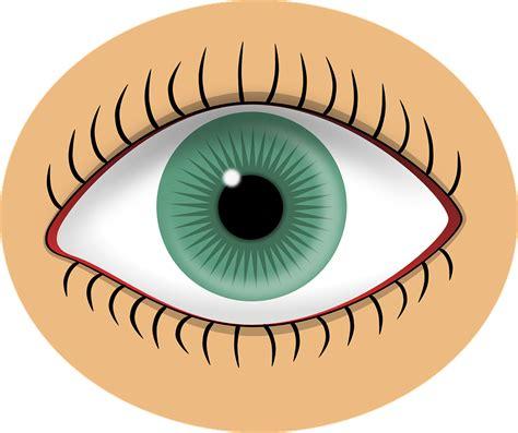 imagenes animadas ojos ojo verde alumno 183 gr 225 ficos vectoriales gratis en pixabay