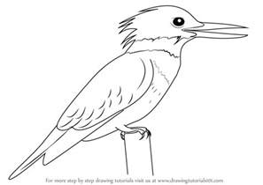 where to draw learn how to draw a belted kingfisher birds step by step