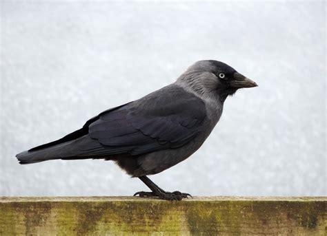 black and grey bird 183 free stock photo