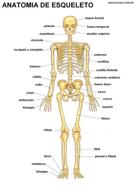 libro misin clash un esqueleto esqueleto humano buscar con google esqueleto esqueleto humano buscar con